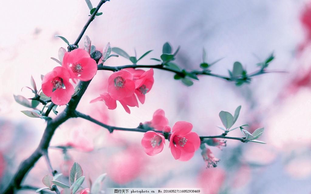 粉红色梅花 梅花雪景 梅花图片素材 梅花图片大全 红梅 腊梅