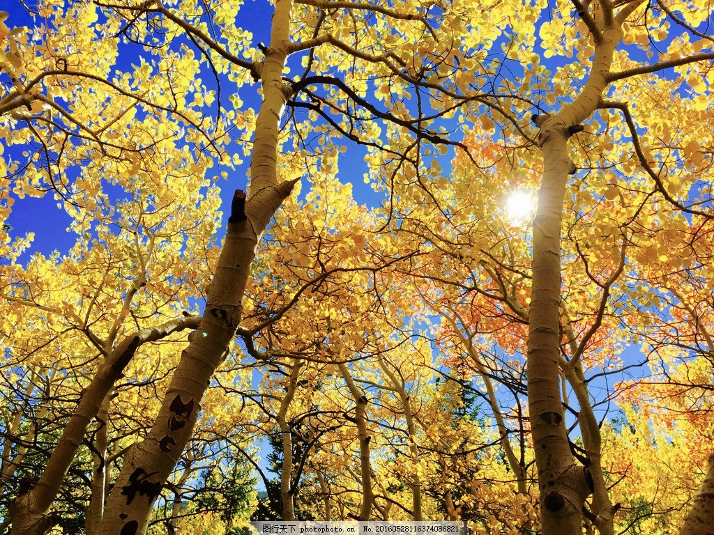 美丽秋天树林风景图片