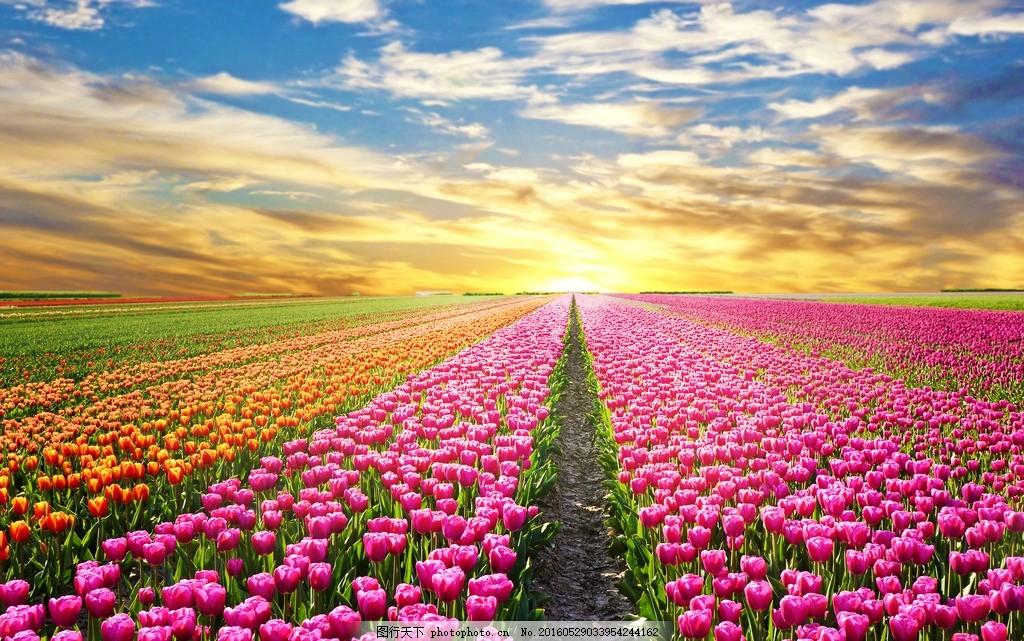 唯美 风景 风光 旅行 自然 秦皇岛 公园 奥林匹克公园 花海 郁金香花