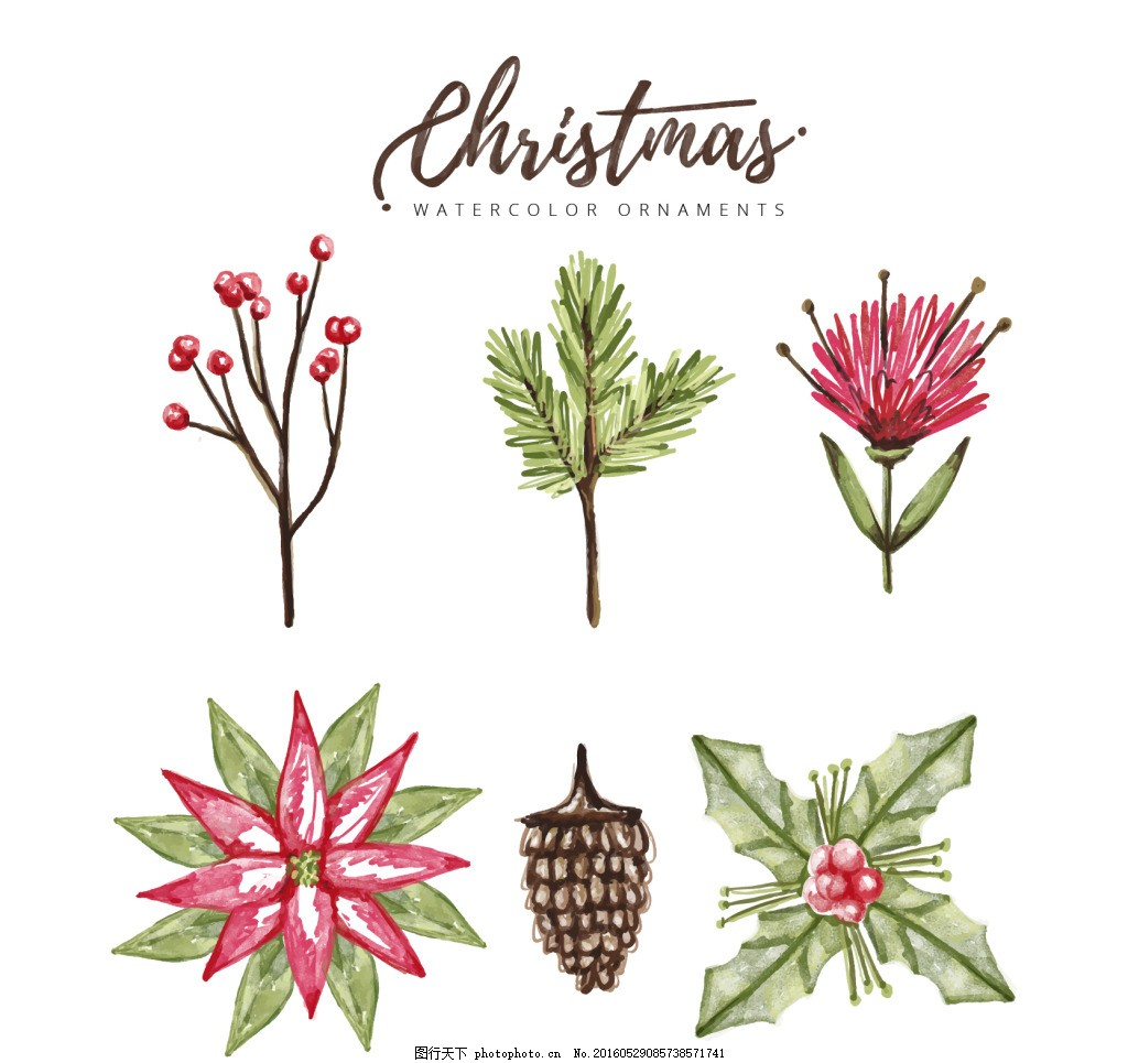 手绘圣诞花卉素材图片