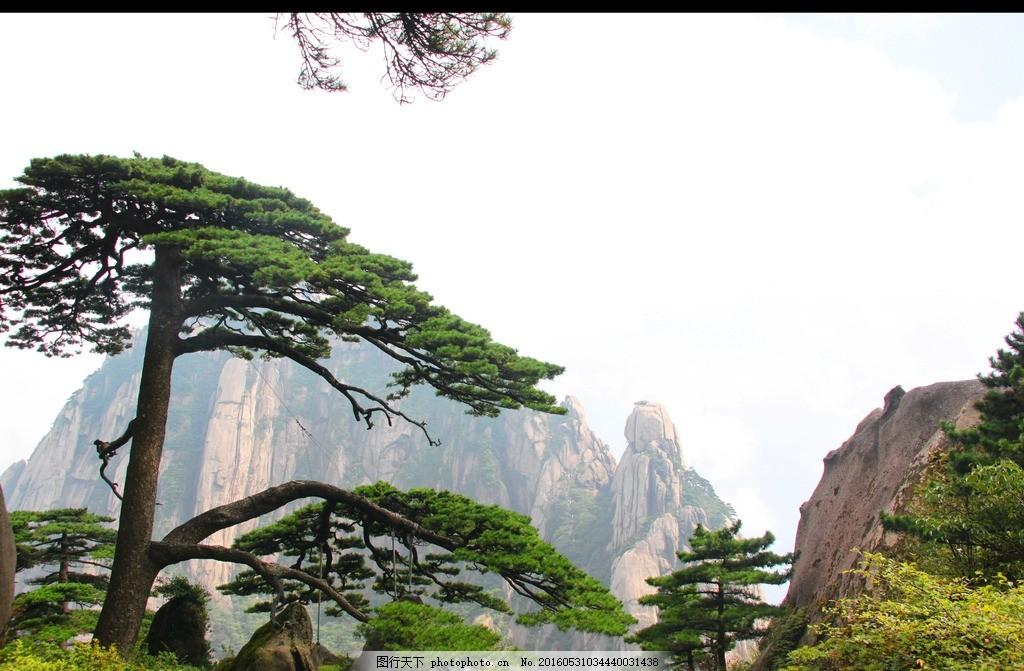 黄山 迎客松 黄山 峰 云海 迎客松 人 高清 摄影 自然景观 山水风景