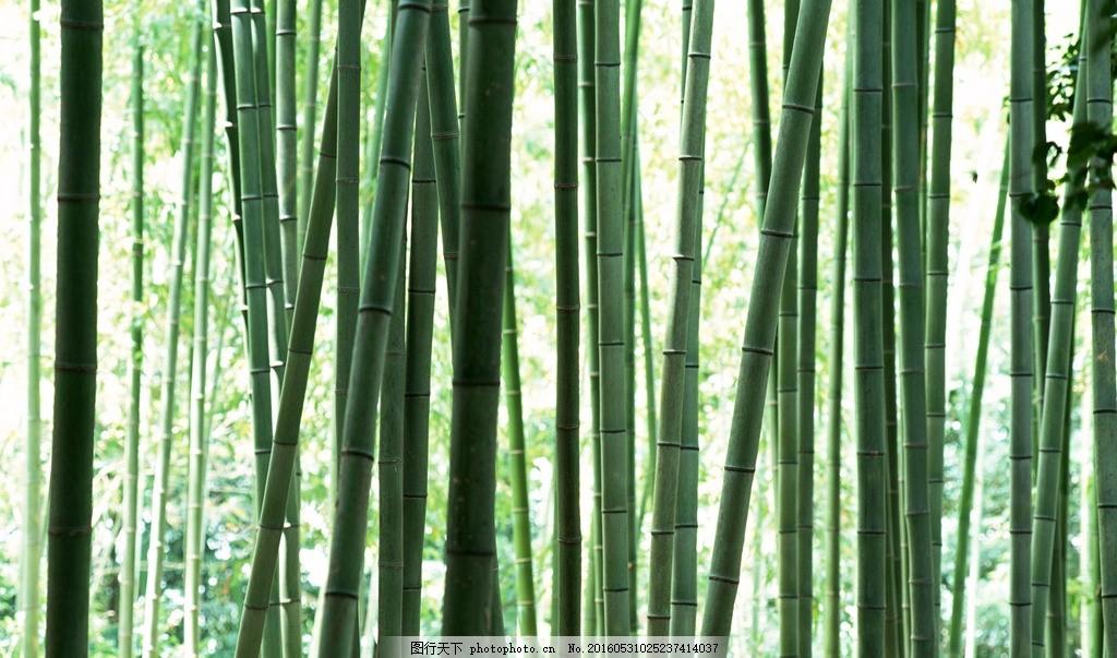 竹子 竹 叶 竹叶 幽静 绿色 风景 自然 摄影 生物世界 树木树叶 350