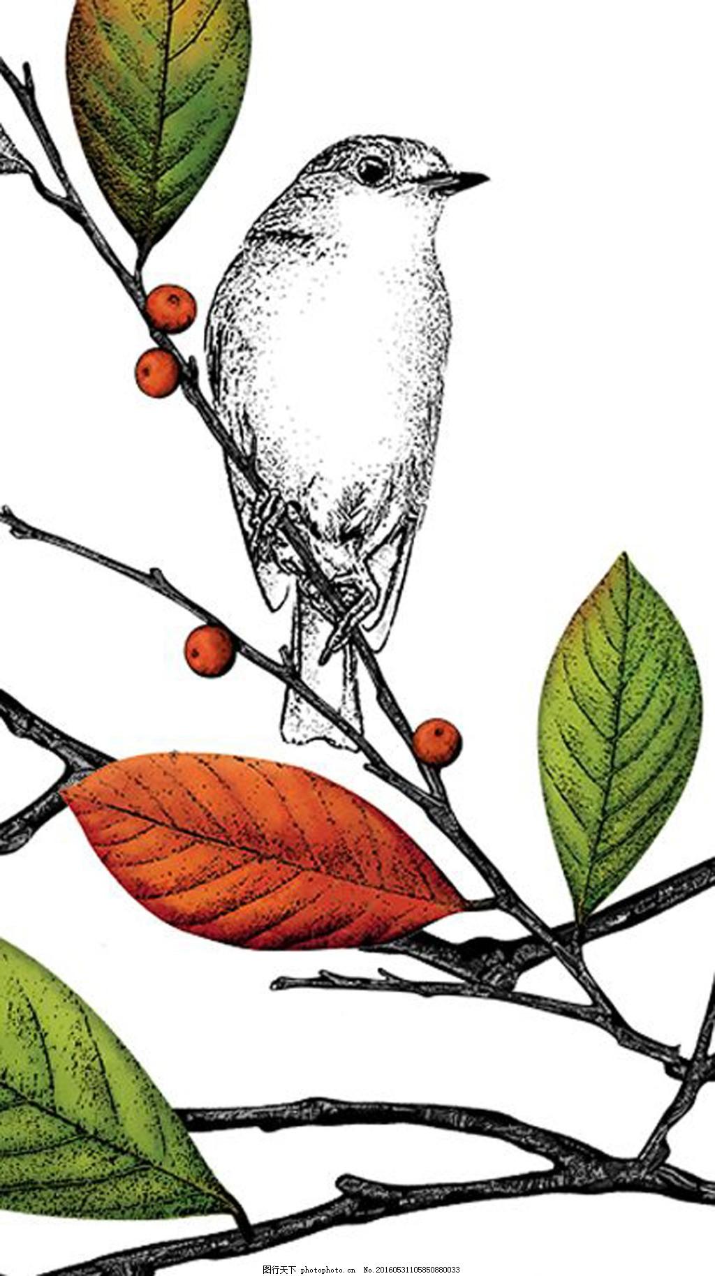 手绘鸟 植物 动物 叶子 白色