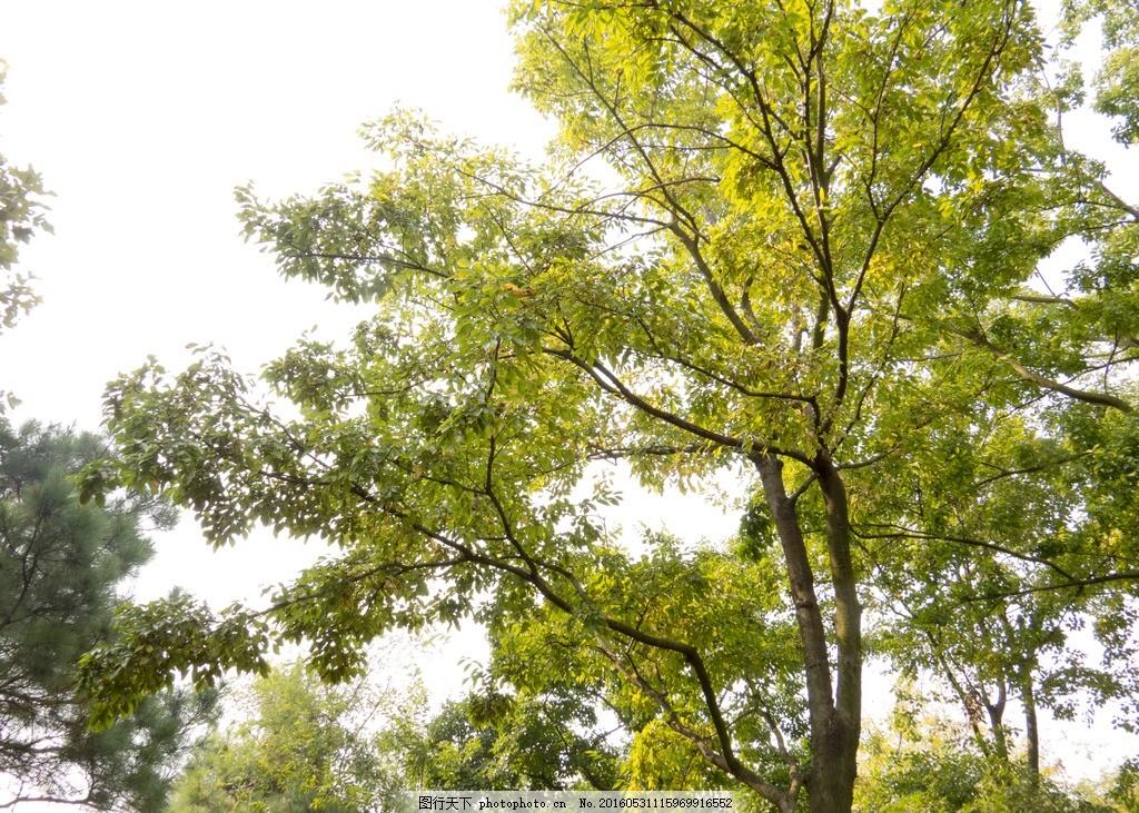 绿树 春天 茂盛 阳光 生机 摄影 自然景观 自然风景