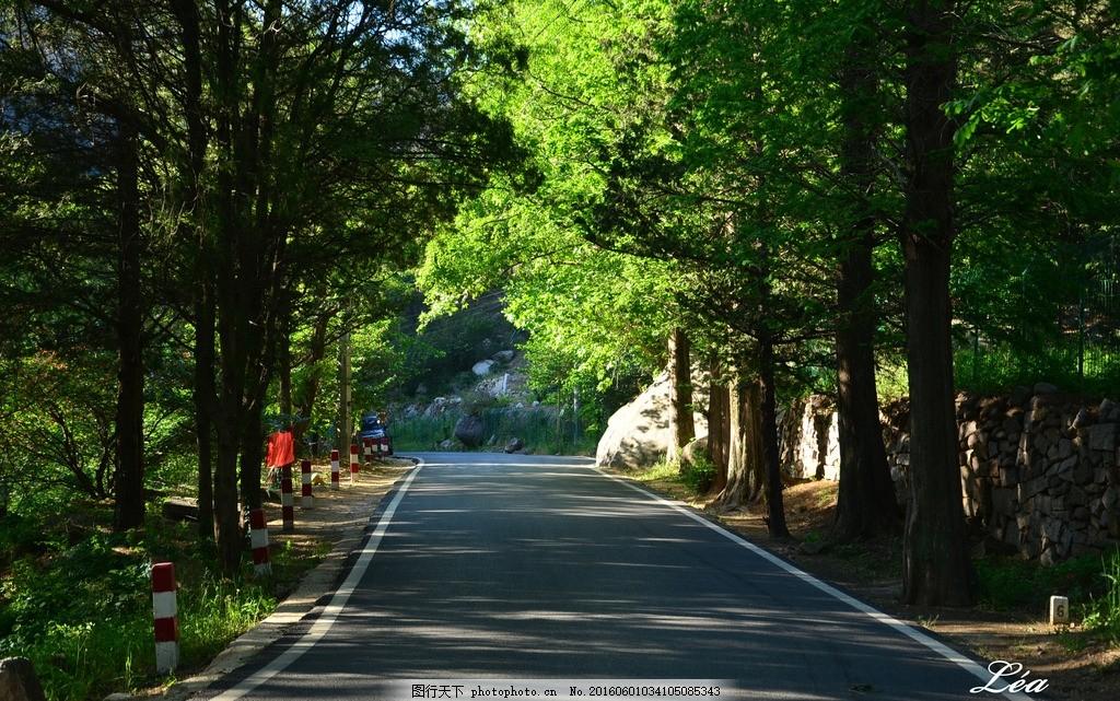 崂山林荫大道 林荫道 宁静悠远 护眼壁纸 绿色壁纸 崂山风景区 摄影图片
