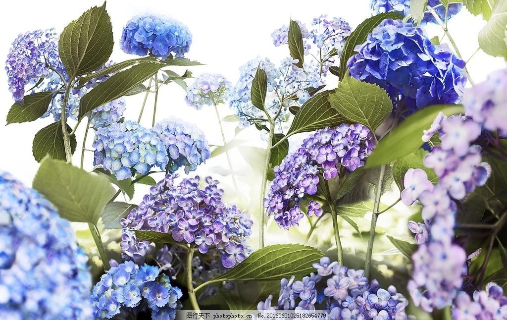 勿忘我 紫色 蓝色 天蓝色 花 花束 设计 生物世界 花草 300dpi jpg