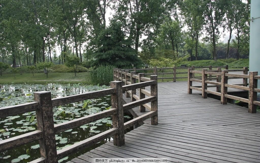 世纪公园 木栈道 荷花池 景观道路 亲水平台 城市设计 摄影 建筑园林