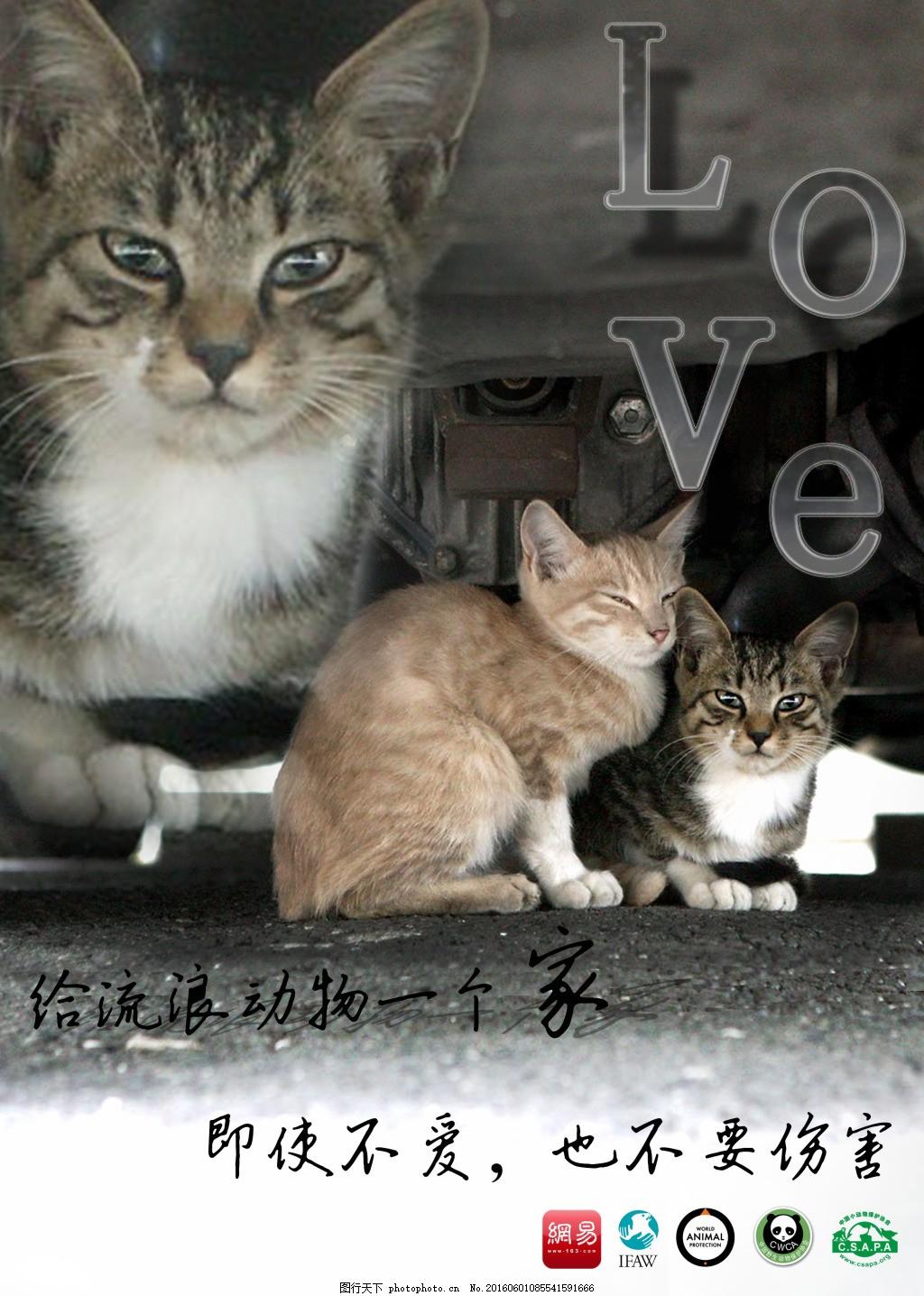 流浪动物公益海报