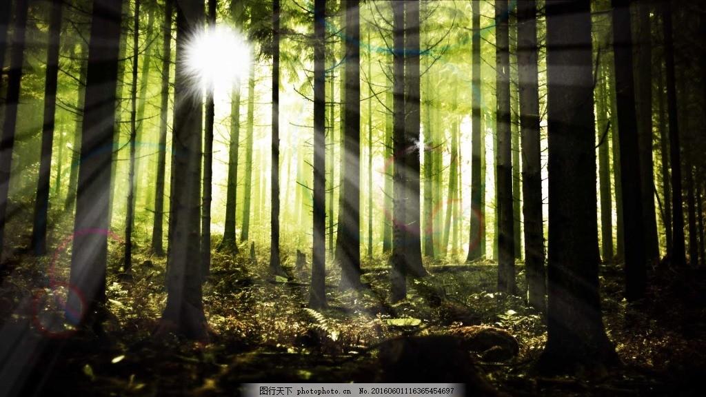 阳光下树林风景图片