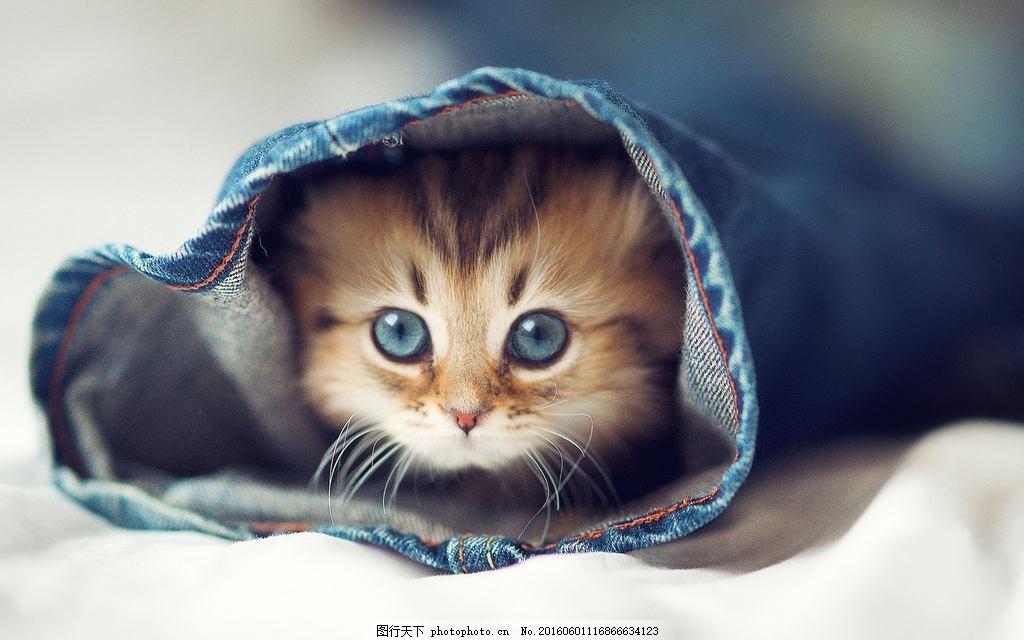 超萌猫咪 猫咪卖萌图片 可爱小猫咪图片 萌猫咪图片 猫咪 萌猫 萌宠