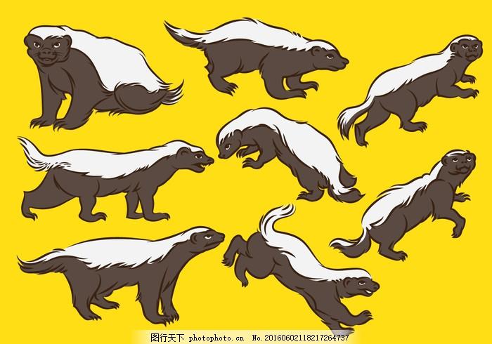 蜜獾卡通 亲爱的獾 动物 孤立 插图 哺乳动物 吉祥物 野生动物