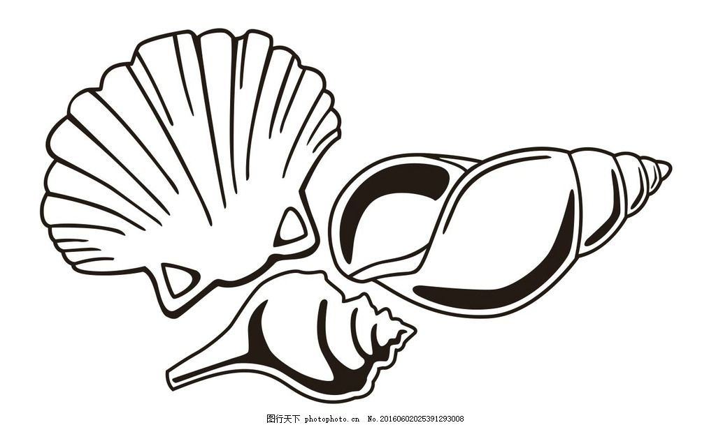 海贝 海螺 插画 简笔画 线条 线描 简画 黑白画 卡通 手绘 简单手绘画