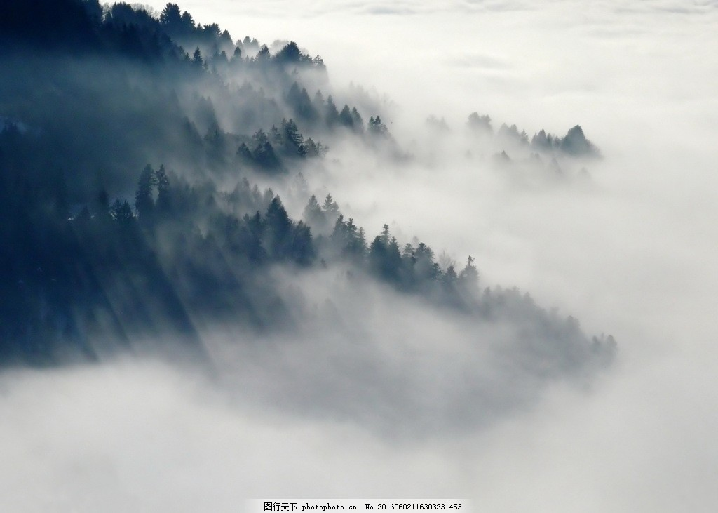 高清云雾森林图片