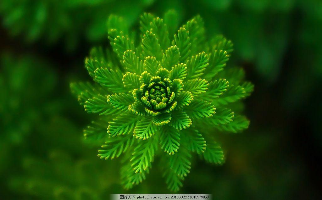 高清绿色植物素材图片