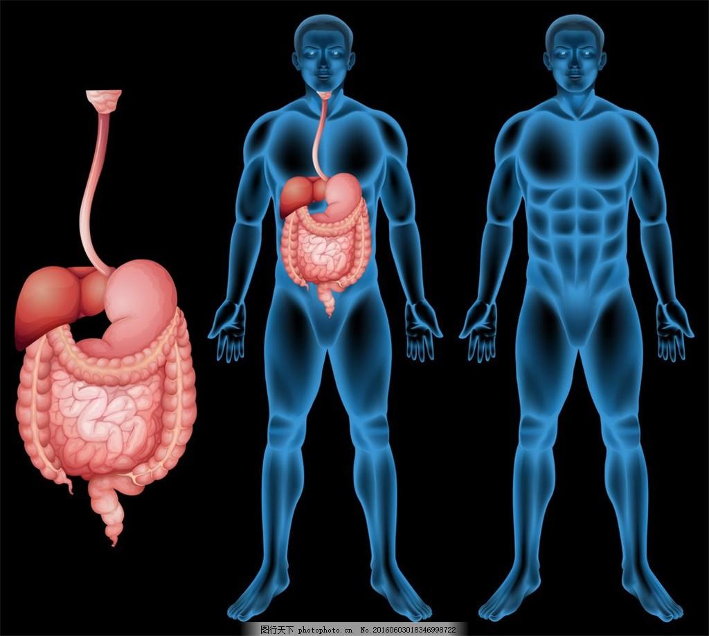 平板 平面设计 心 设计 人 模板 医学 口腔 人体 系统 骨骼 胃 部位