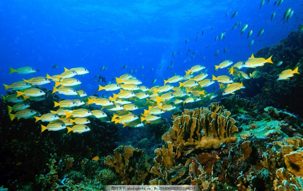 海底世界 珊瑚树 清澈 蔚蓝 蓝色 海洋 珊瑚礁 岩石 热带鱼