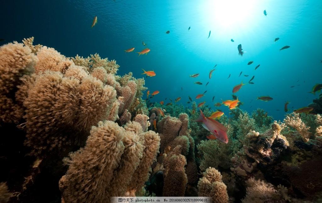 海底世界 珊瑚树 清澈 蔚蓝 阳光 蓝色 海洋 珊瑚礁 岩石 热带鱼