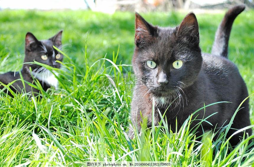 草丛中的猫咪 绿草 动物 尾巴 红色
