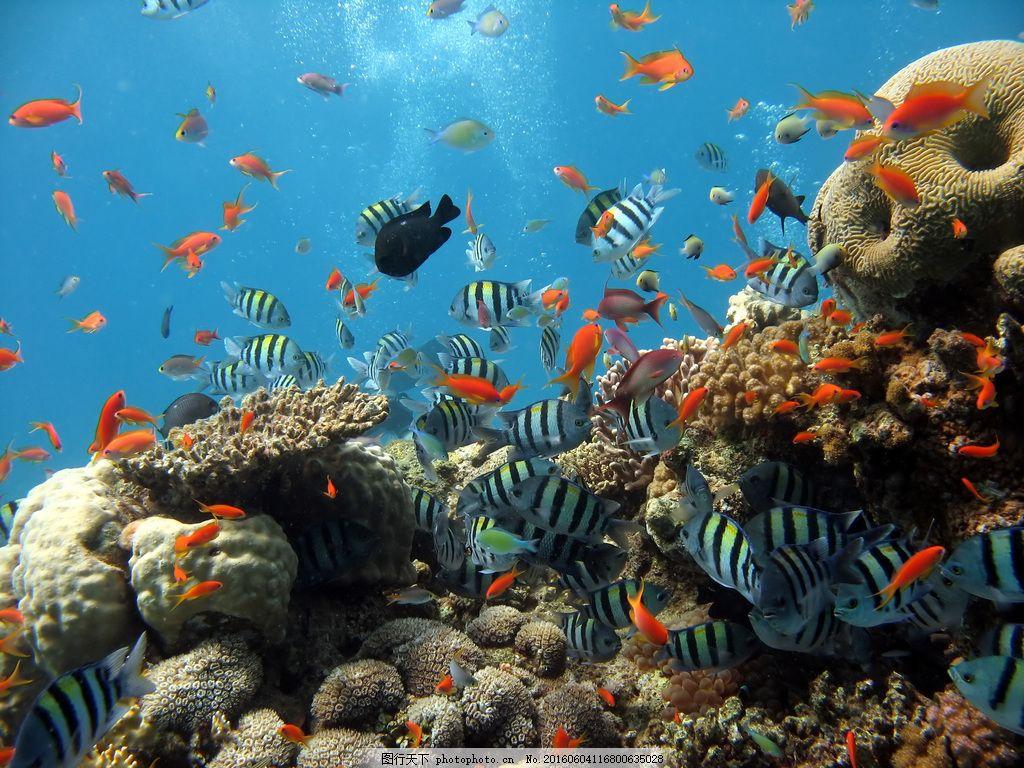 海底世界 海底动物 海底鱼 海里图片 高清图片