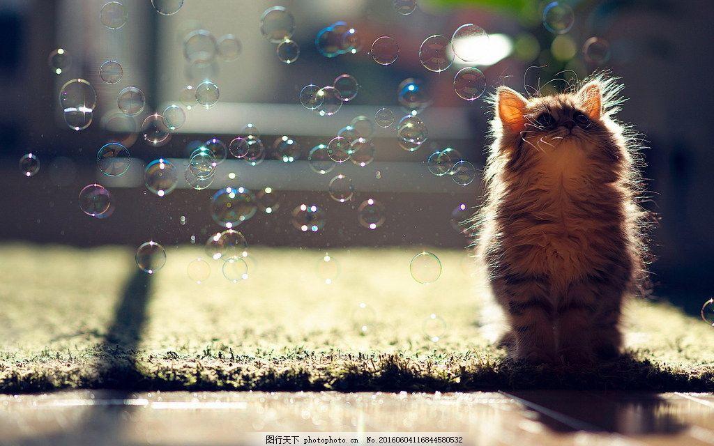 唯美可爱小猫咪图片素材下载 孤单 猫猫 猫咪 萌宠 伤感