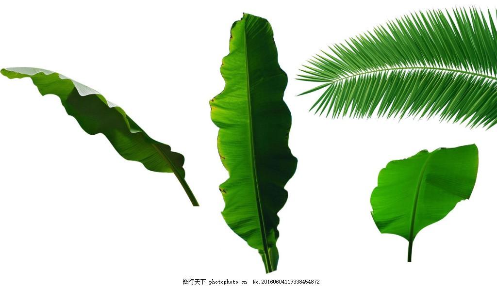 芭蕉和椰子树叶子png素材