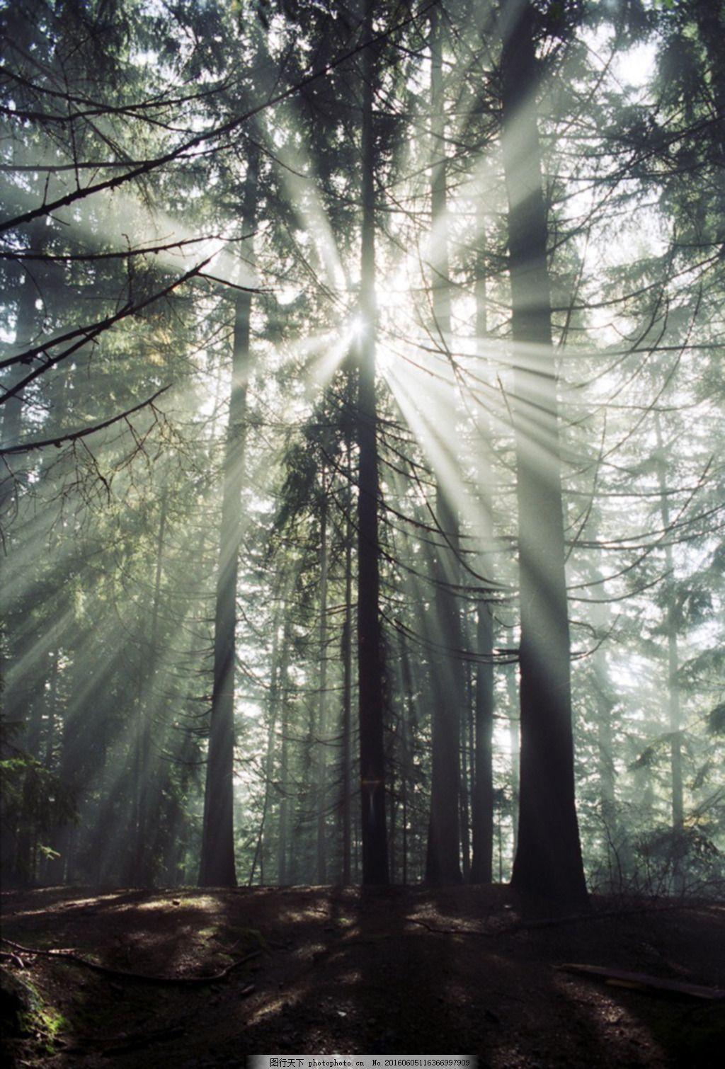 日光照射的森林 阳光 光线 参天大树