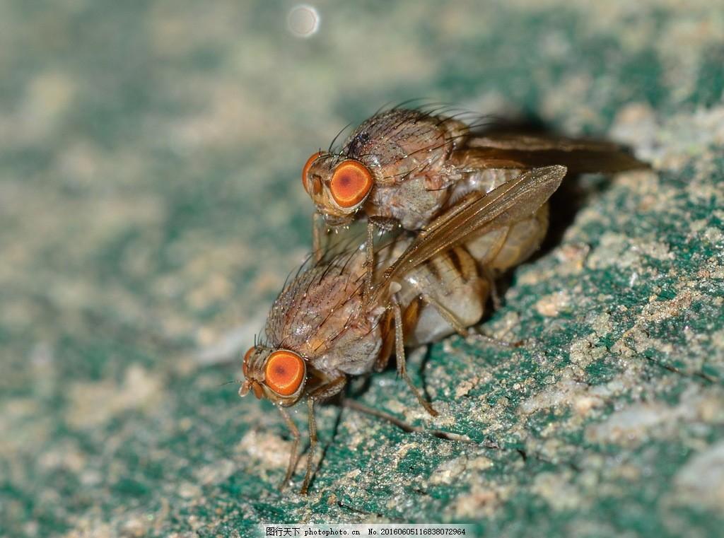 高清昆虫交配 动物交配 小昆虫 自然昆虫 节肢动物