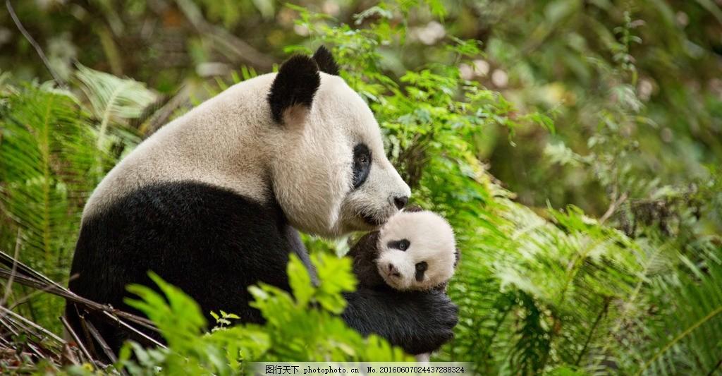 壁纸 大熊猫 动物 1024_533