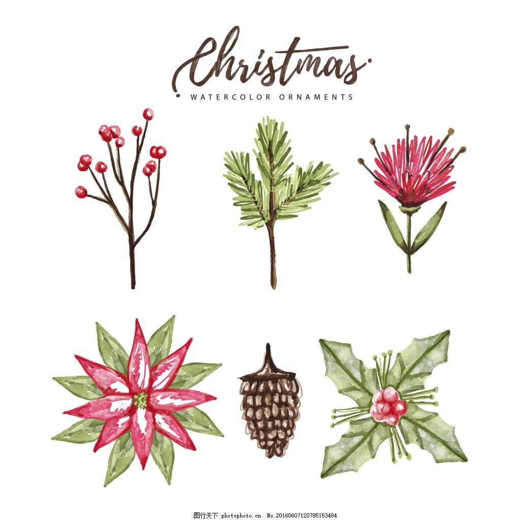 水彩植物 花朵 手绘