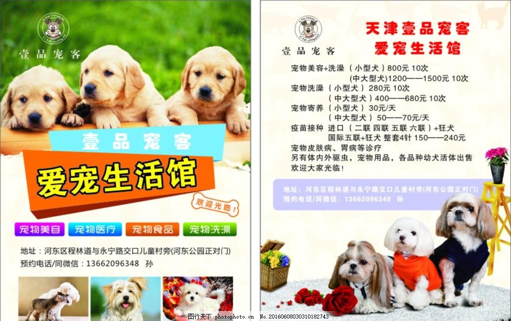 宠物店宣传 宠物店dm 宠物店dm单 宠物店彩页 宠物店传单 设计 广告