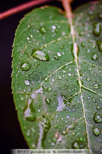 叶子 雨滴 自然 厂 特写 绿色 森林 树 动物区系 黑色