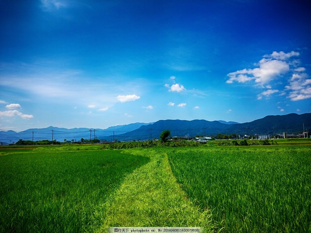 绿色稻田风景图片