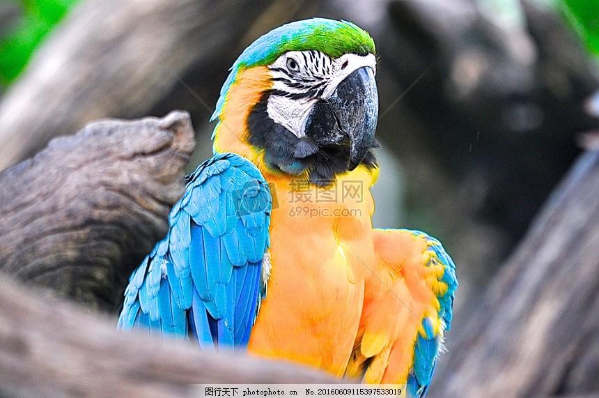 鸟,动物,热带,鹦鹉,动物,热带雨林