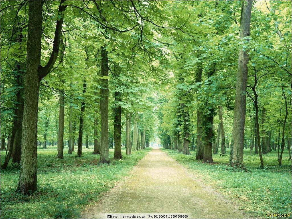 唯美林间小路风景图片素材下载 树林 绿树 树荫 小路 绿也