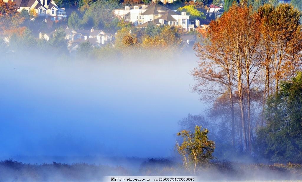 意境 郊外风景设计素材 落叶 秋天树林 设计 树林 晨雾     蓝色 jpg