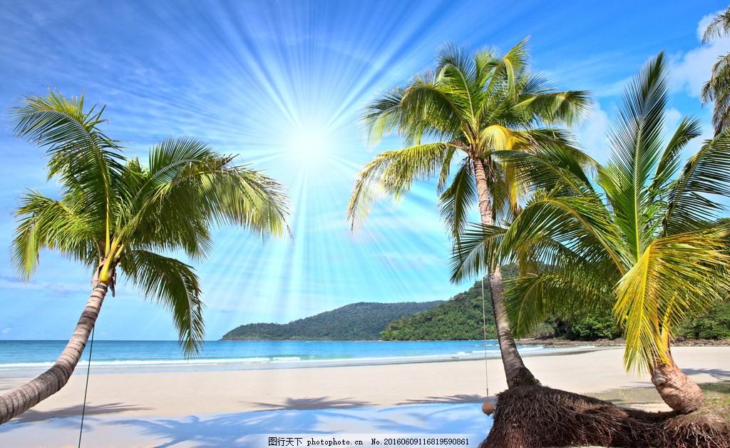 海边椰子树风景图片