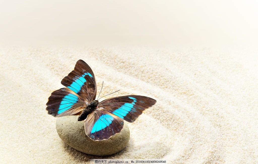 蝴蝶 唯美 动物 可爱 生物 美丽蝴蝶 可爱蝴蝶 摄影