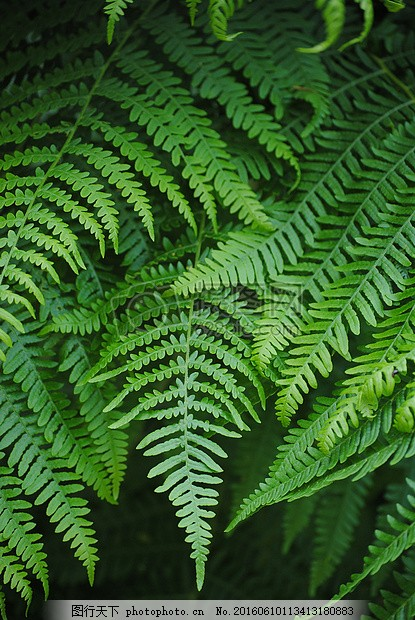 蕨类 蕨菜 绿色 厂 森林 黑色