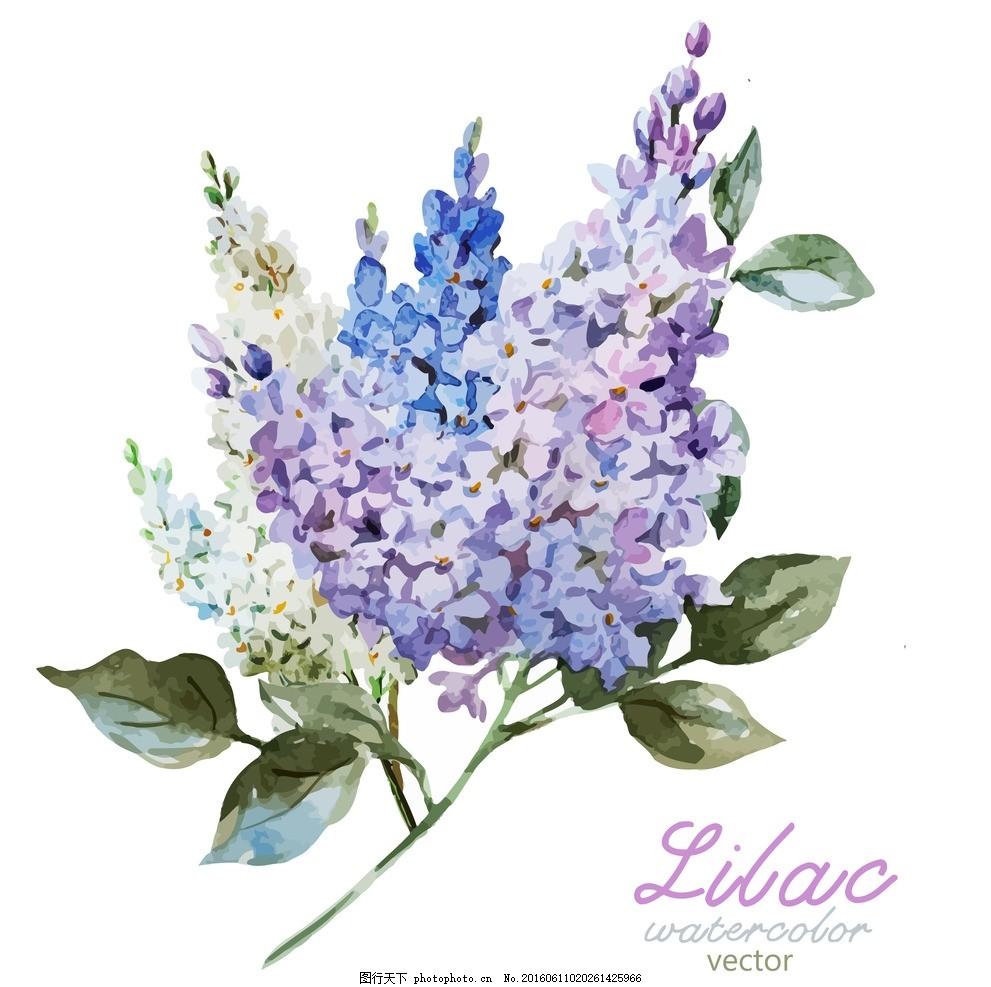 花卉 大花 矢量图 高清素材 玫瑰花 月季花 热带花卉 热带植物 叶子