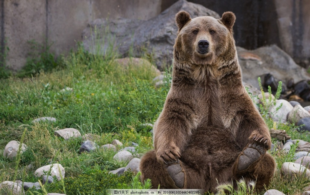 唯美 动物 可爱 野生 凶猛 熊 大熊 棕熊 摄影 生物世界 野生动物 300