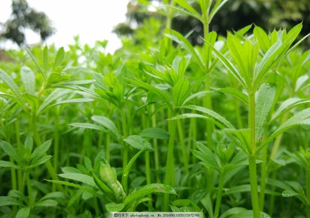 微观草坪 微观世界 草坪 草地 绿草 绿色植物 摄影 生物世界 花草 72