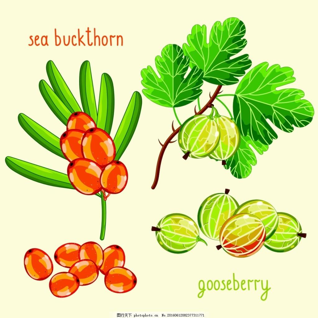 有机水果 果蔬 水果蔬菜 卡通水果 水果插画 灯笼果 蔬菜水果 生物