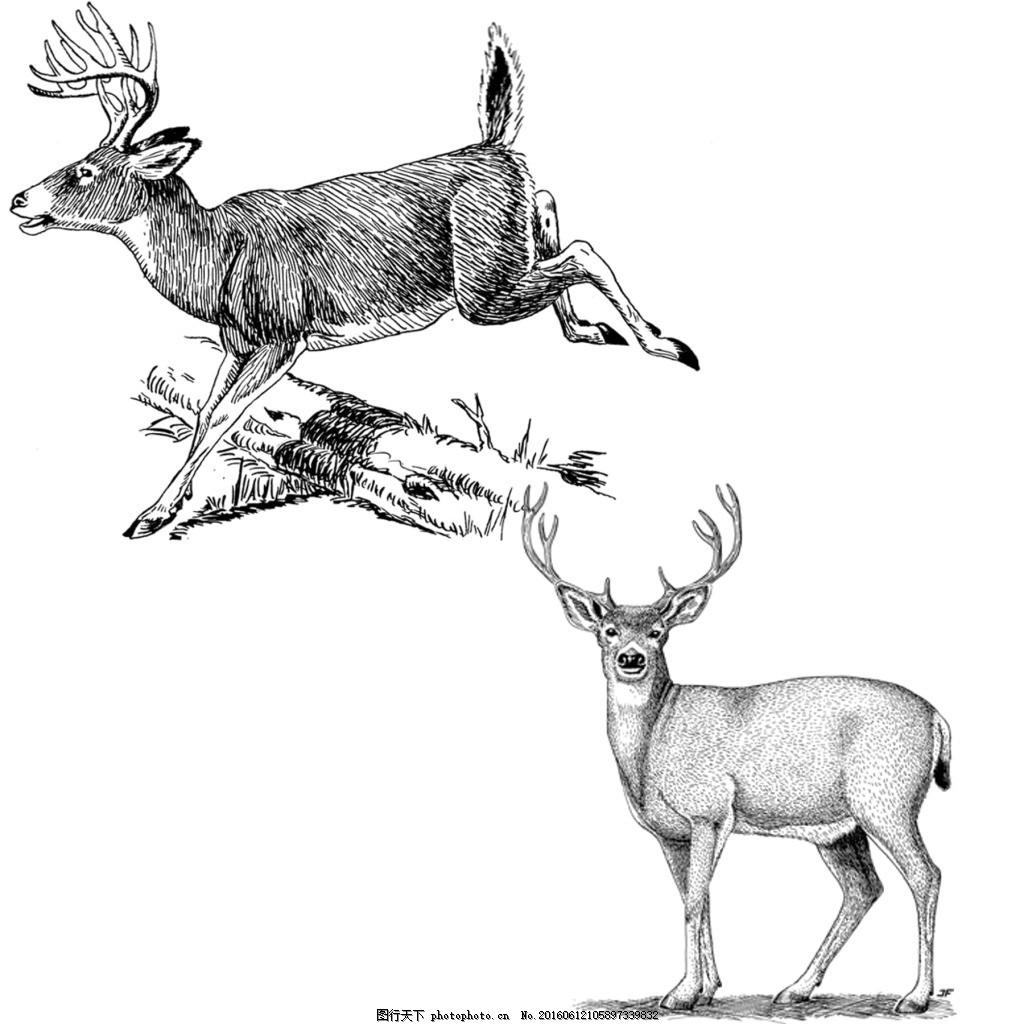 素描绘画两只奔跑及站立警惕的鹿 动物 服装图案 位图 野生动物