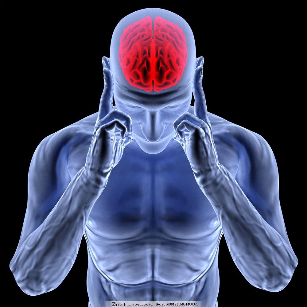 人体大脑模型 人体大脑模型图片素材 人体模型 人体结构 人体器官