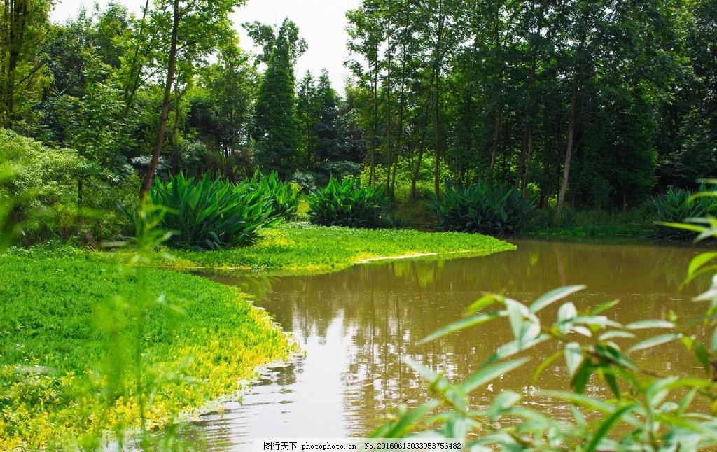 湿地公园 草地 小溪 树林 蓝天 白云 湿地 竹 旅游风光 摄影 旅游摄影