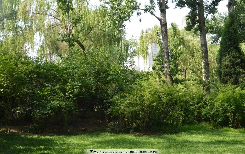 小路 绿树 绿地 树木 草地 花草 园林景观 公园美景 园林风景 绿化