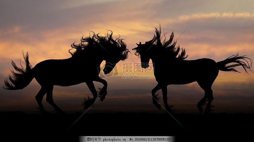 正在奔跑的马儿 动物 哺乳 天空 红色