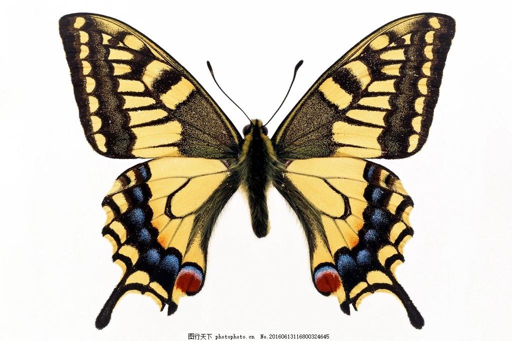 高清花蝴蝶 飞禽 昆虫 动物 小动物