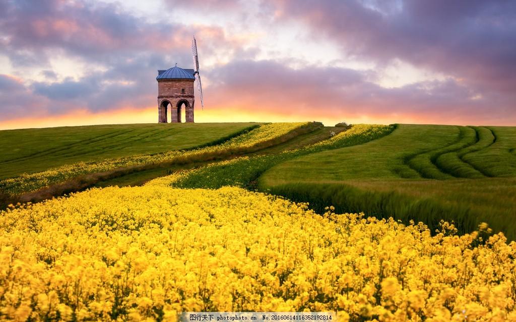 高清美丽的田园风景图片下载 乡村 田园 田地 麦田 油菜花