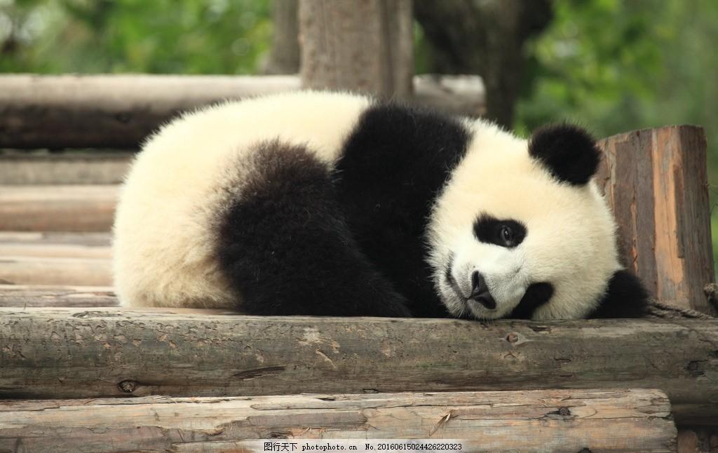 动物是怎么睡觉的图片